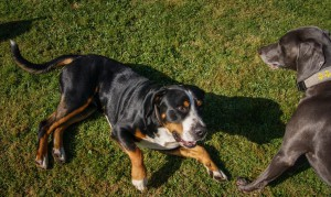 Herwig Spandau - mobile Hundeschule